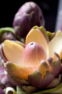 Lotusartischocke